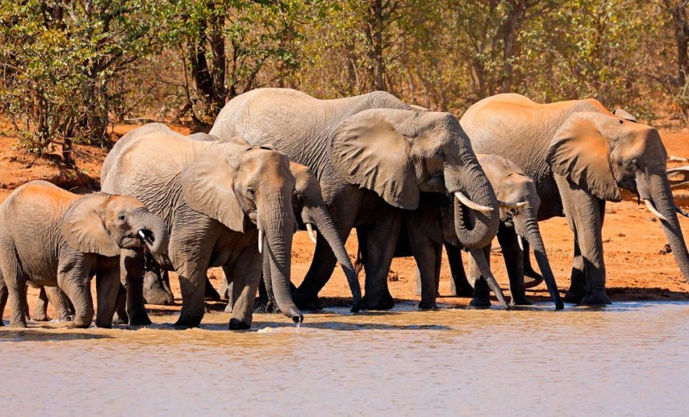 Zuid-Afrika Olifanten Safari